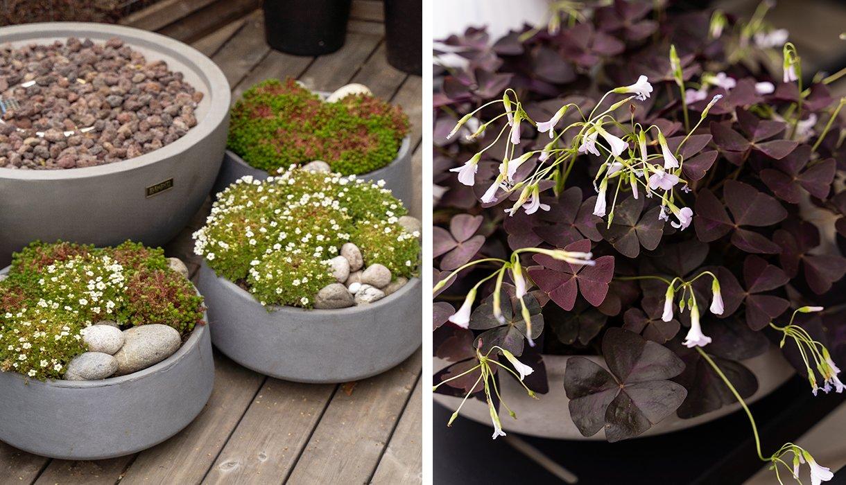 Krukker med potteplanter og dekorative steine