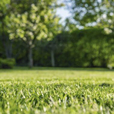 Grønt gress i hele sommer