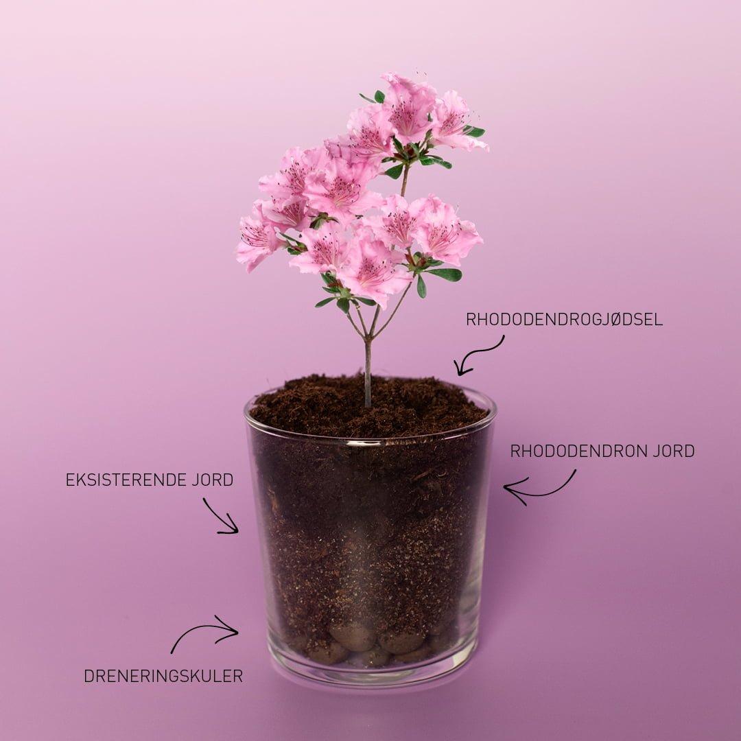 Hageland Mudcocktails Rhododendron Sour