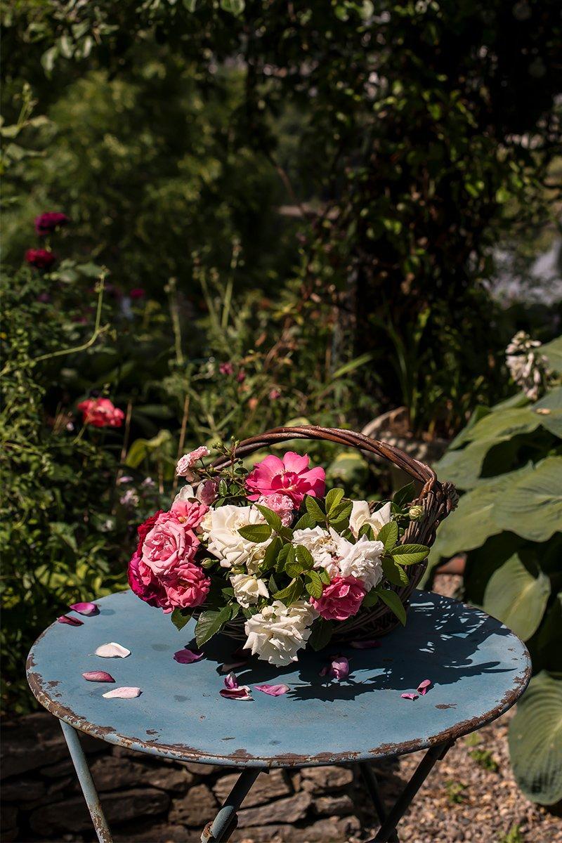 Vakre hvite og rosa roser i kurv