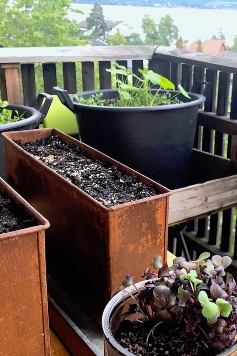 Balkonghjørne med plantevekster