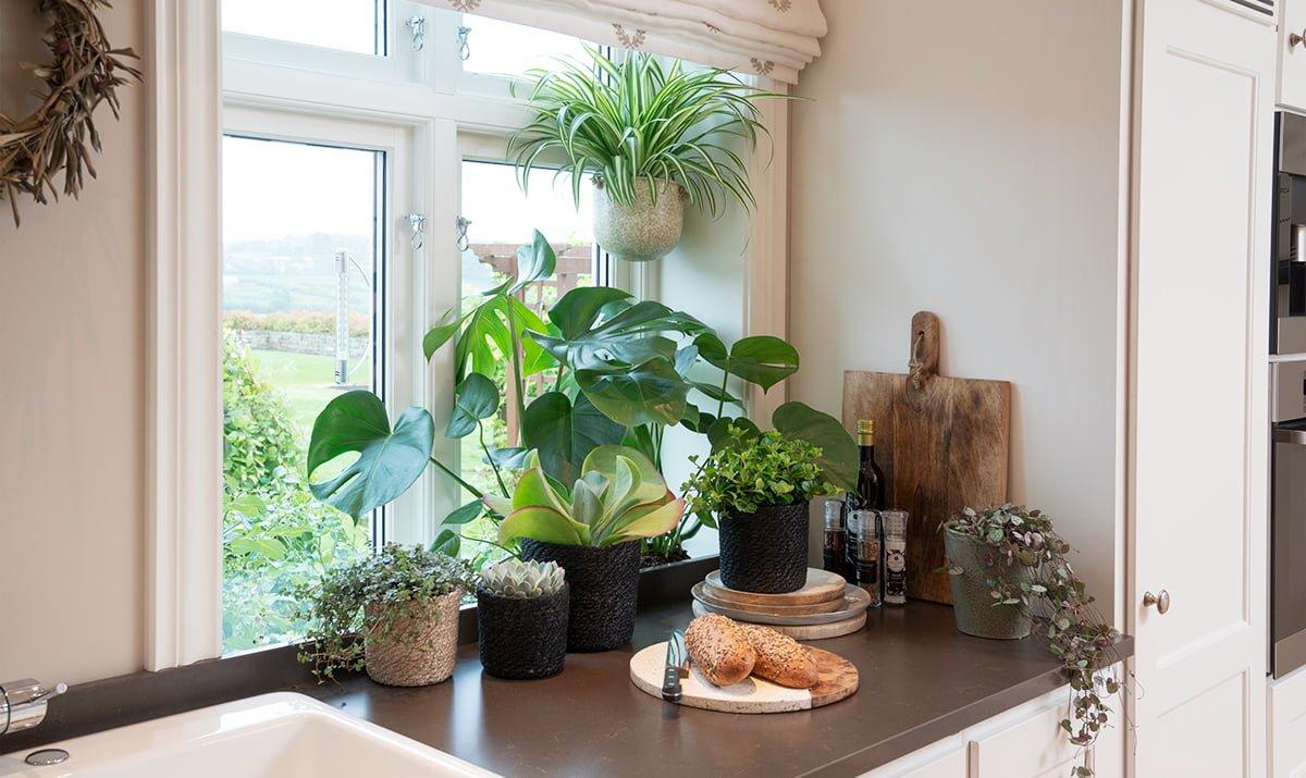 Bilde av grønne inneplanter på kjøkkenbenken
