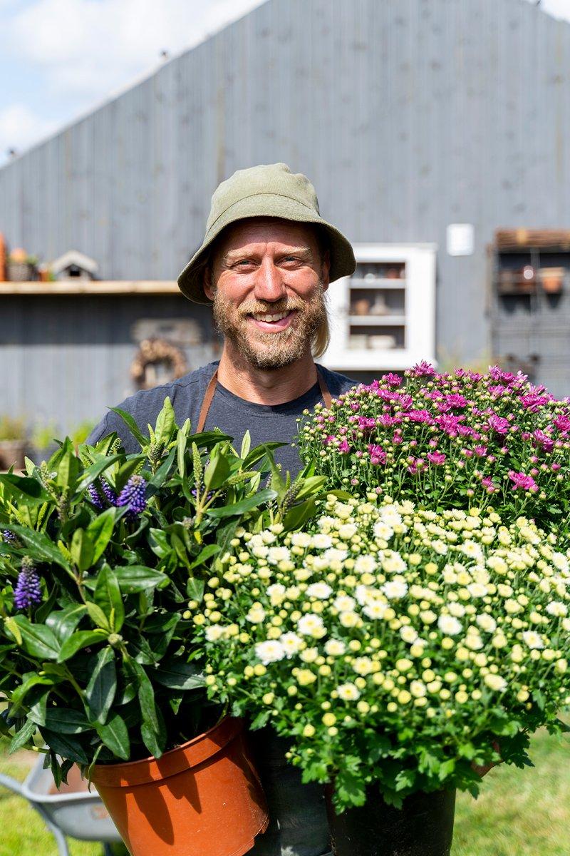 Mannlig gartner holder potter med store høstplanter, krysantemum og hebe