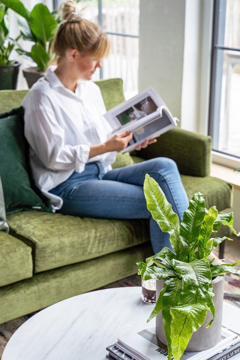 kvinne sitter i sofa og leser, grønn plante på bordet og i bakgrunnen