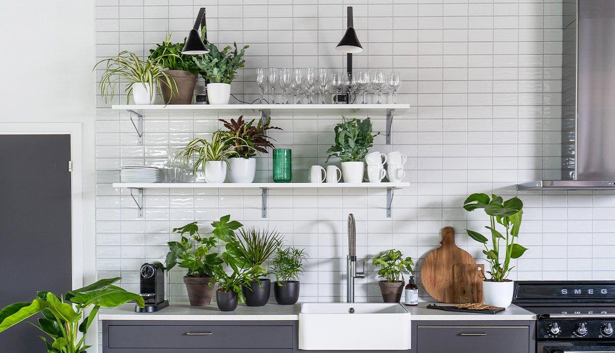 kjøkken med hvite fliser og åpne hyller med masse grønne planter