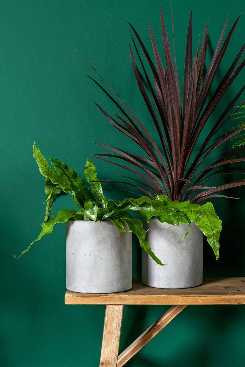 to grønne planter på hylle foran mørk grønn vegg