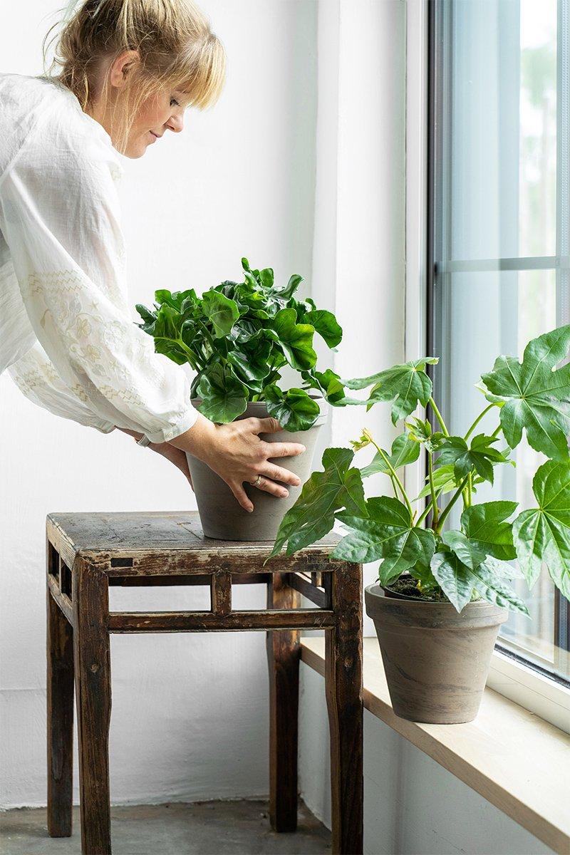 kvinne plasserer grønn plante i vinduskarm