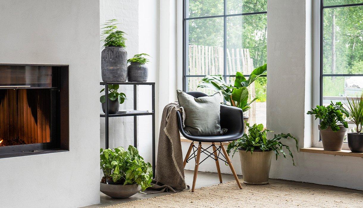 stueinteriør med stol, peis, vinduer og mange grønne planter av forskjellig type