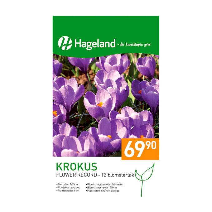 Frøpakke av Krokus 'Flower Record'