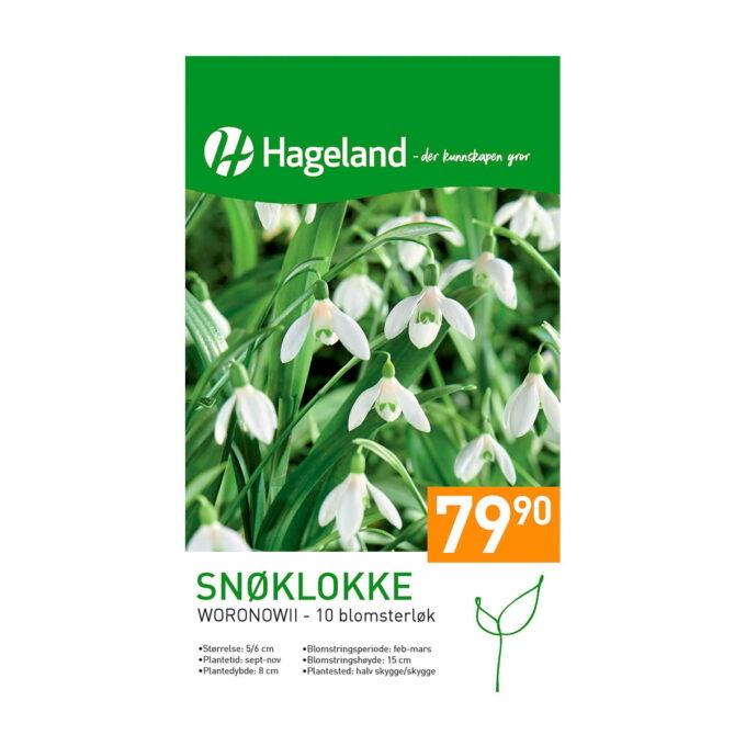 Frøpakke av Snøklokke woronowii