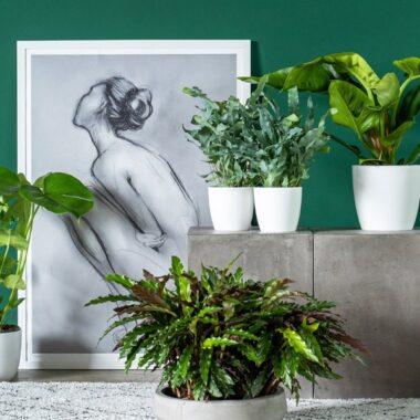 fem forskjellige grønne planter i stilleben foran grønn vegg med maleri
