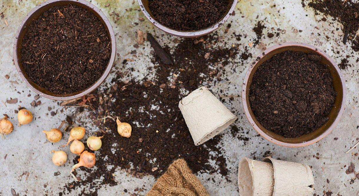 blomsterløk, jord og potter på sementunderlag