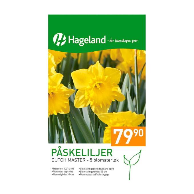 Frøpakke av Påskelilje Narcissus Dutch Master