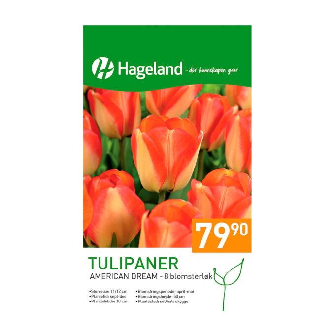 Frøpakke av Tulipan American Dream