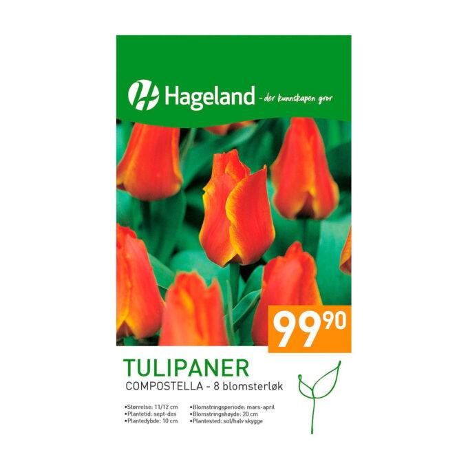Frøpakke av tulipan Compostella