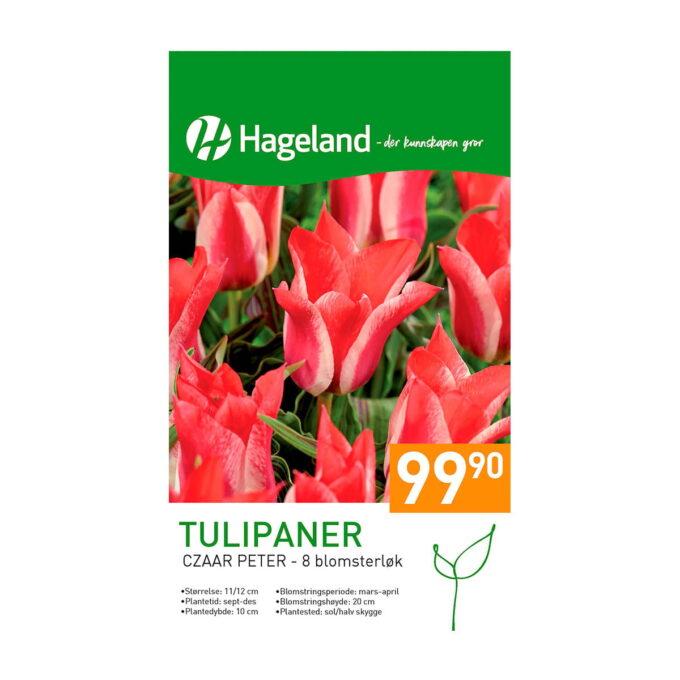 Frøpakke av Tulipan Czaar Peter