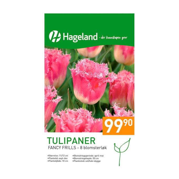 Frøpakke av tulipan Fancy Frills