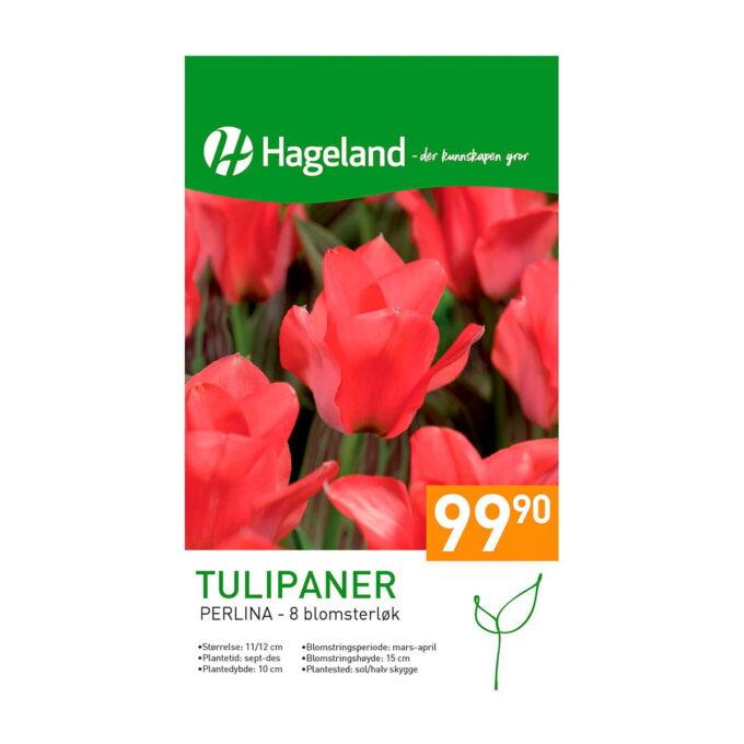 Frøpakke av Tulipan Perlina