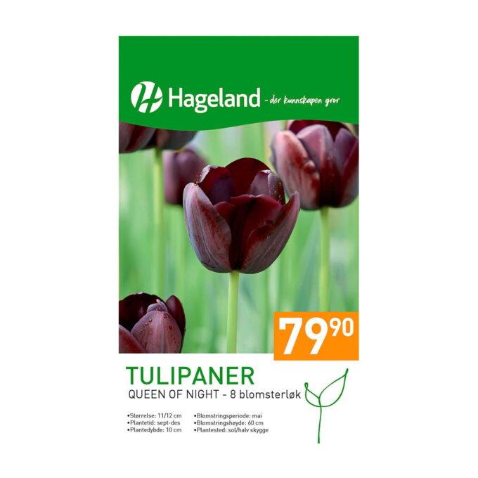 Frøpakke av Tulipan Queen of Night