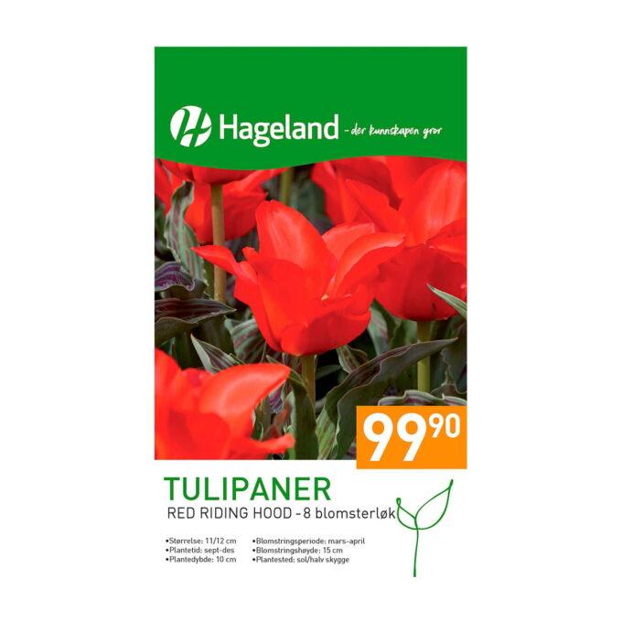 Frøpakke av tulipan Red Riding Hood