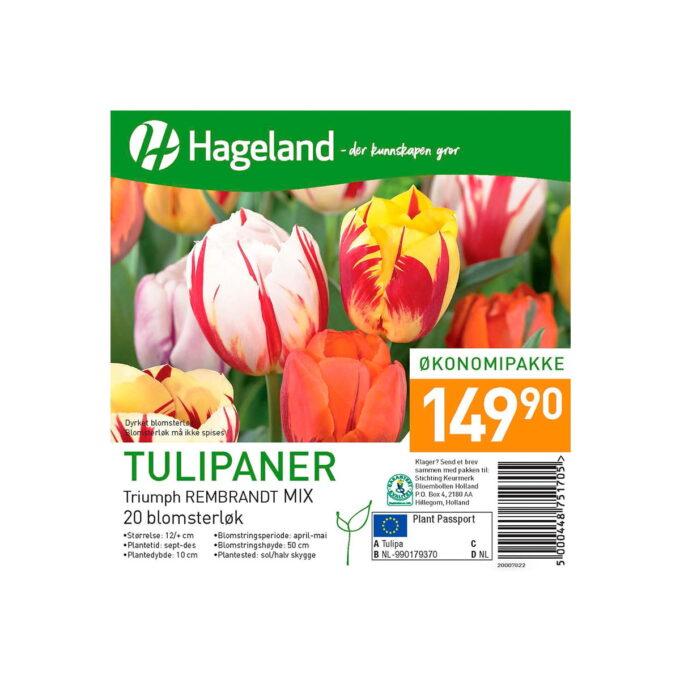 Bilde av frøpakke Tulipan Rembrandt Mixed pris 149,90 kroner