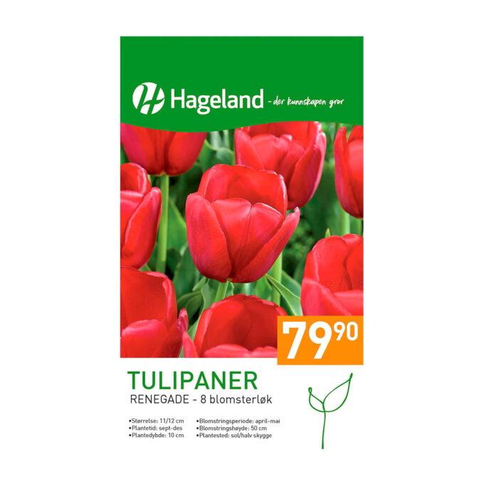 Frøpakke av Tulipan 'Renegade'