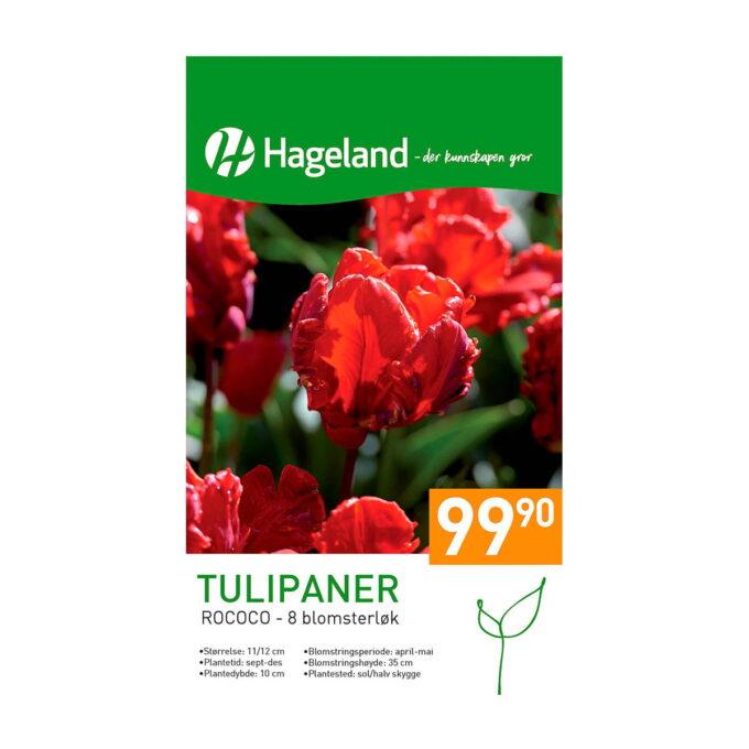 Frøpakke av tulipan Rococo