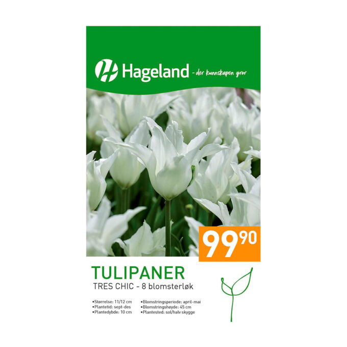 Frøpakke av tulipan Tres Chic