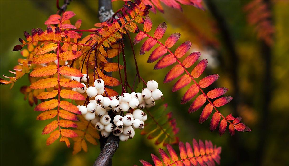 Nærbilde av hvirtogn og orange blader