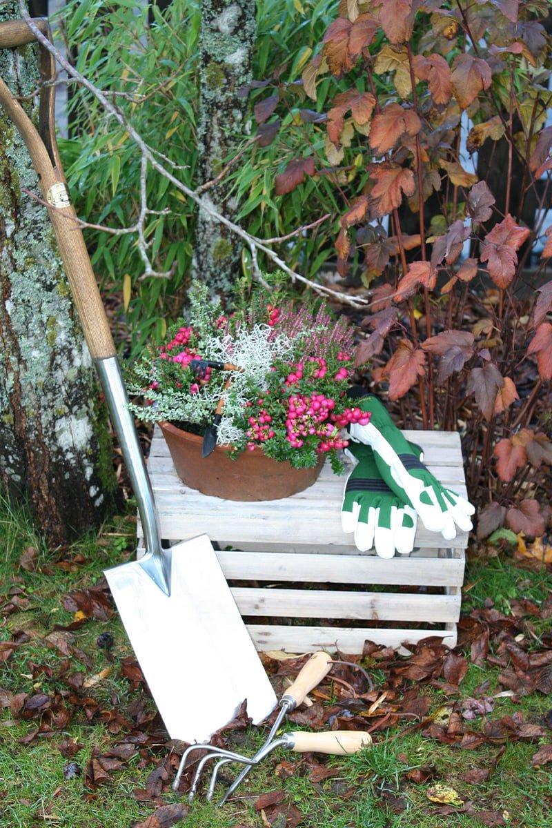 spade og hansker oppstil i høsthage. Klar for planting.