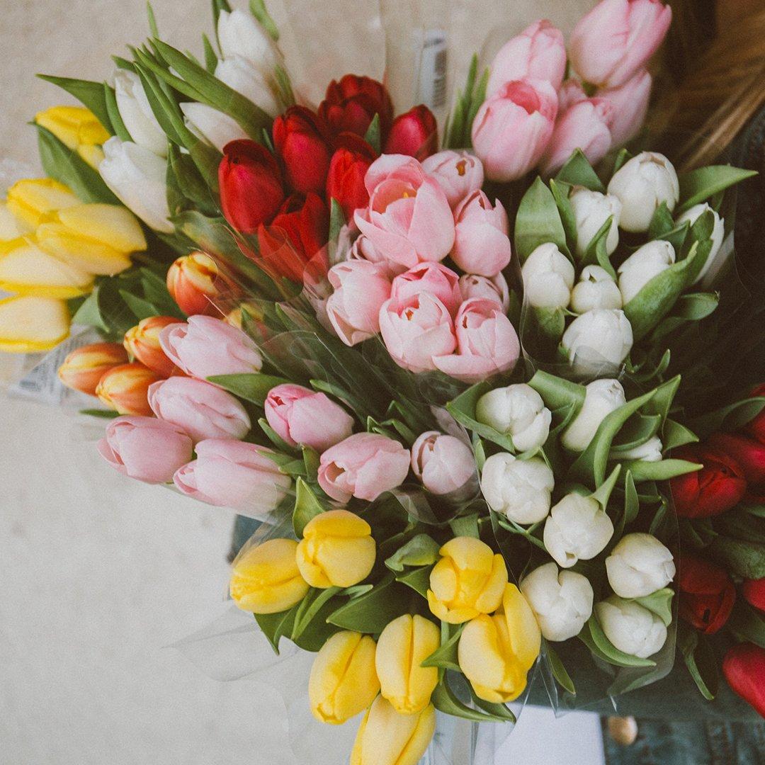 tulipaner-januar-3for100
