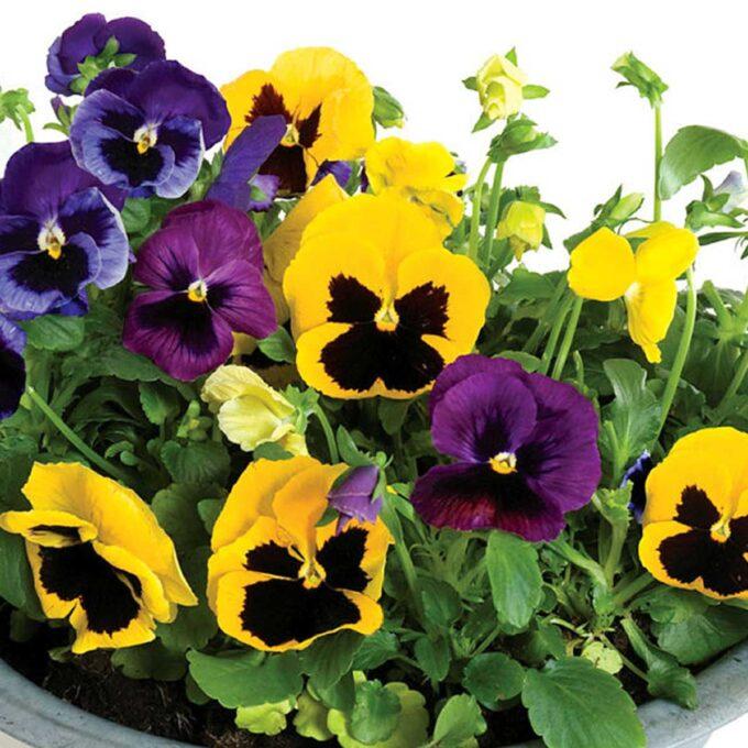 stemor store blomster