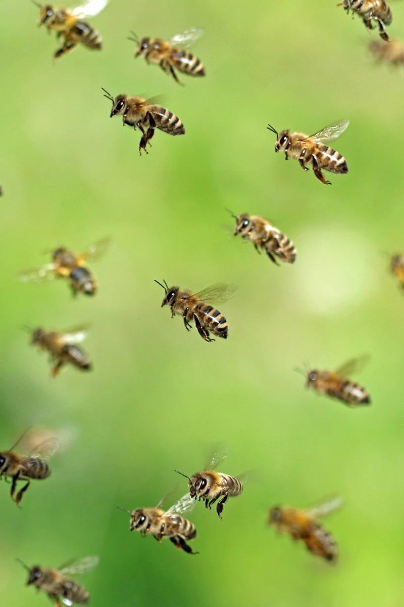 mange bier flyr i lufta