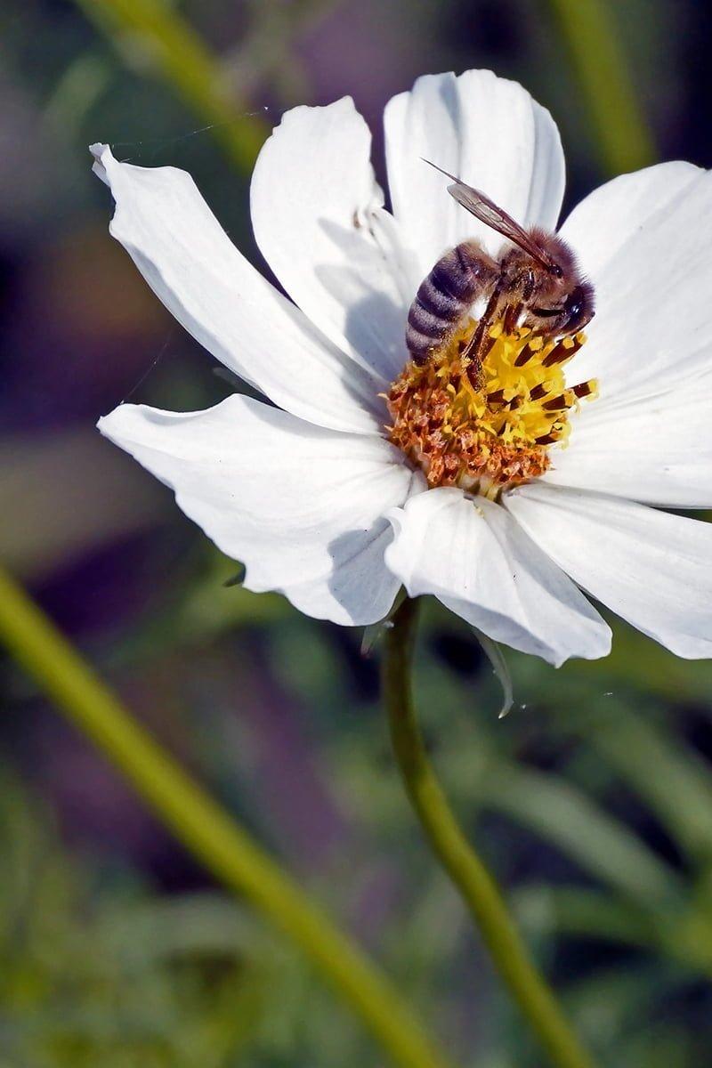 bie på Pyntekorg