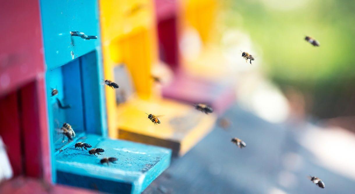 bier som flyr inn i flerfarget bikube