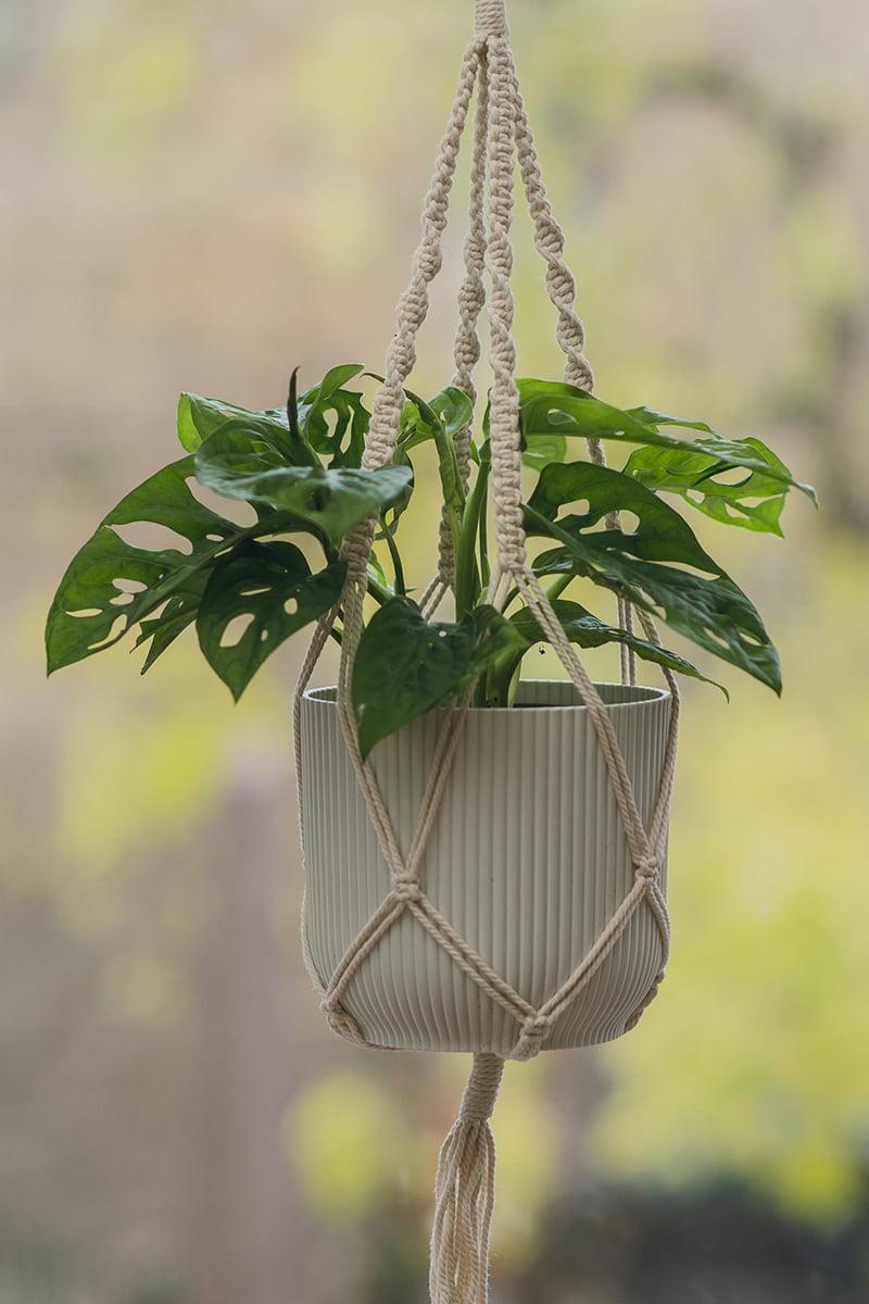 monstera vindusblad i potte hvit
