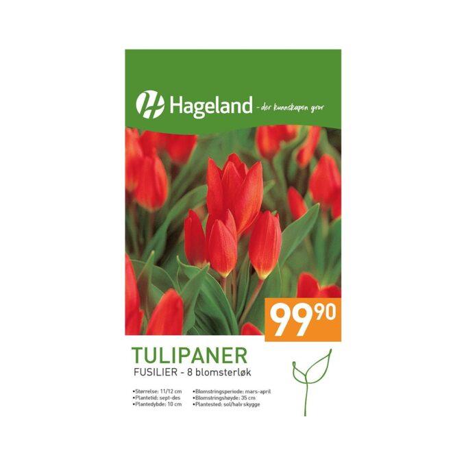 Frøpakke av Tulipan Praestans Fusilier