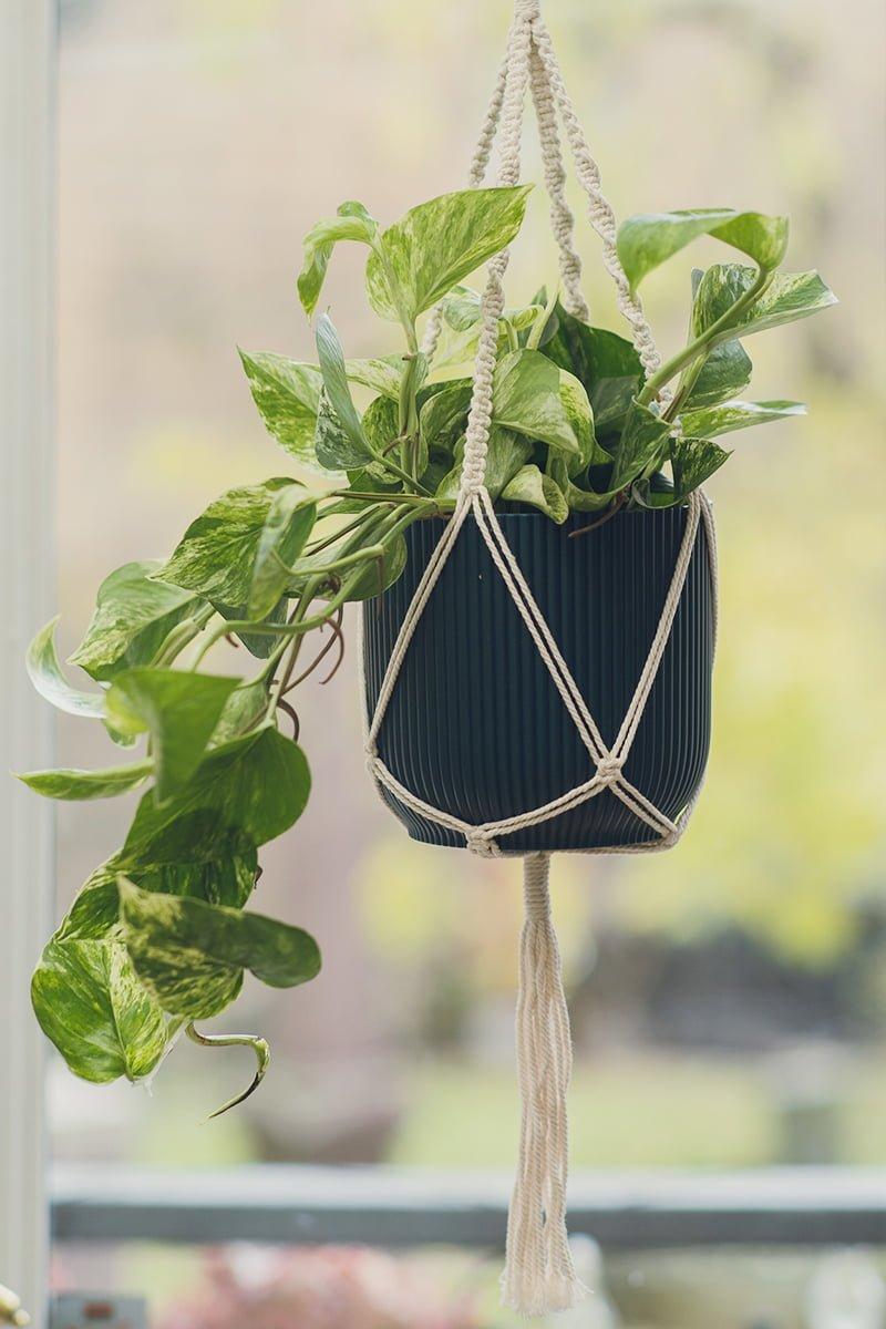 Potte for innendørs bruk med modernt dekorativt mønster på bord med planter