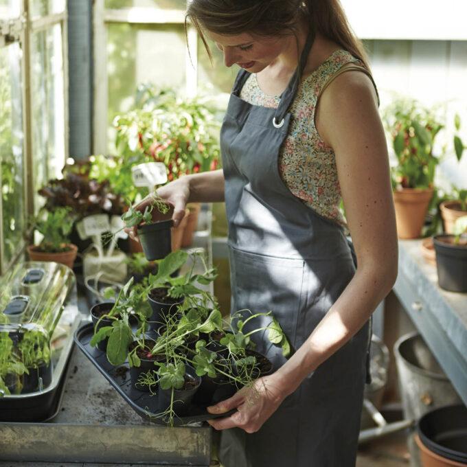 Praktisk sett som inneholder dyrkefat, etiketter, brett og plastlokk. Ventil på lokket for optimal tilførsel av oksygen