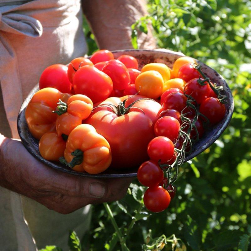 tomater-spesialsorter-800x800px